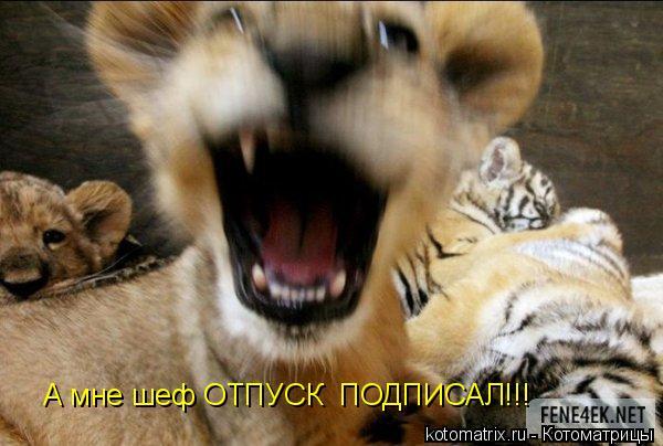 Котоматрица: А мне шеф ОТПУСК  ПОДПИСАЛ!!!