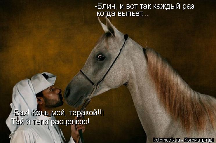 Котоматрица: -Вах! Конь мой, таракой!!! Тай я тепя расцелюю! -Блин, и вот так каждый раз когда выпьет...