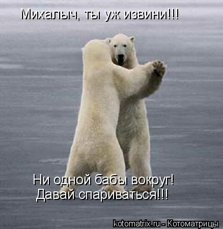 Котоматрица: Михалыч, ты уж извини!!! Ни одной бабы вокруг! Давай спариваться!!!