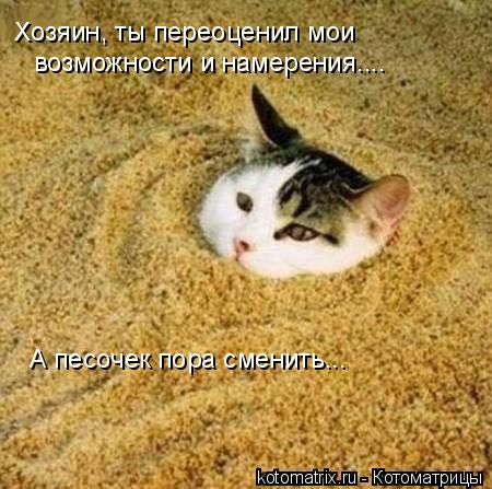 Котоматрица: Хозяин, ты переоценил мои  возможности и намерения.... А песочек пора сменить...