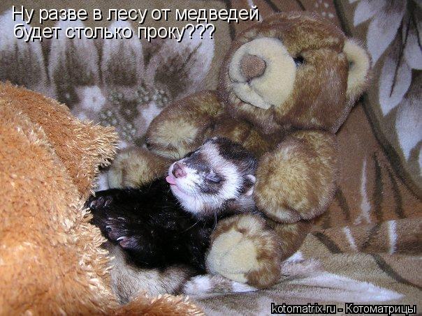Котоматрица: Ну разве в лесу от медведей будет столько проку???