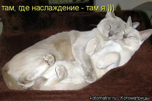 Котоматрица: там, где наслаждение - там я )))