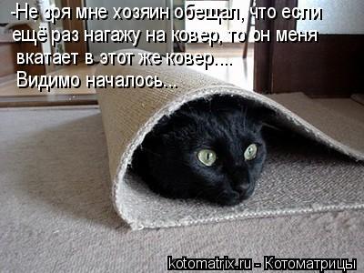 Котоматрица: -Не зря мне хозяин обещал, что если  ещё раз нагажу на ковер, то он меня вкатает в этот же ковер.... Видимо началось...