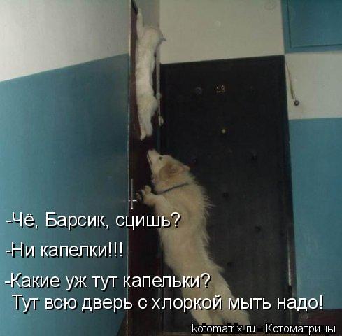 Котоматрица: -Какие уж тут капельки? -Ни капелки!!! -Чё, Барсик, сцишь? Тут всю дверь с хлоркой мыть надо!