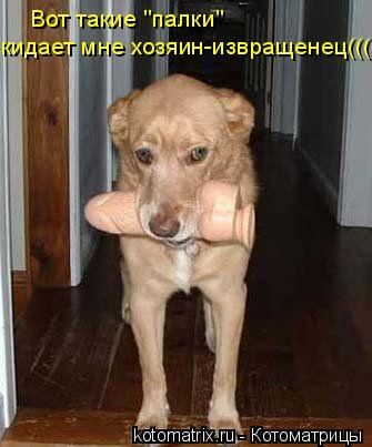 "Котоматрица: Вот такие ""палки""  кидает мне хозяин-извращенец((("