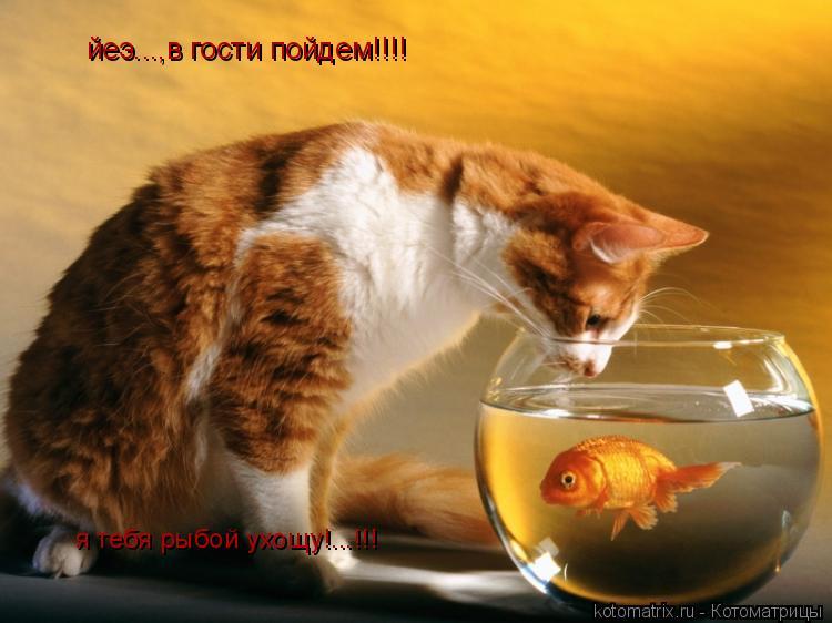 Котоматрица: йеэ...,в гости пойдем!!!! я тебя рыбой ухощу!...!!!