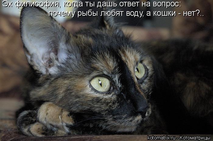 Котоматрица: Эх филисофия, когда ты дашь ответ на вопрос: почему рыбы любят воду, а кошки - нет?..