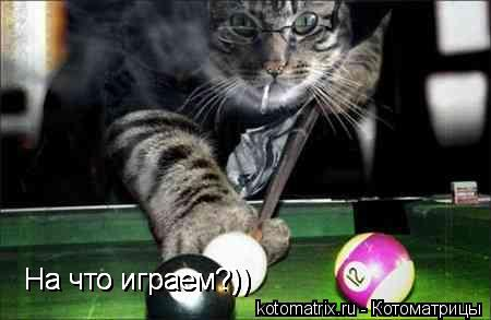Котоматрица: На что играем?)) На что играем?)) На что играем?))