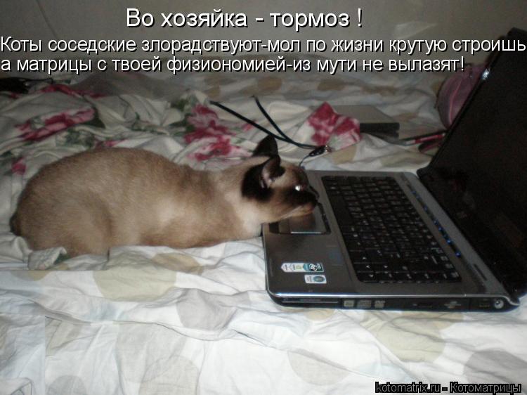 Котоматрица: Во хозяйка - тормоз ! Коты соседские злорадствуют-мол по жизни крутую строишь! а матрицы с твоей физиономией-из мути не вылазят!
