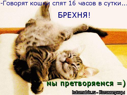 Котоматрица: -Говорят кошки спят 16 часов в сутки... БРЕХНЯ! мы претворяемся =)