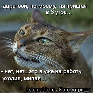 Котоматрица: -дарагоой, по-моему, ты пришел  в 6 утра... - нет, нет...это я уже на работу  уходил, милая...