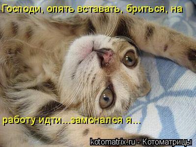 Котоматрица: Господи, опять вставать, бриться, на работу идти...замонался я...