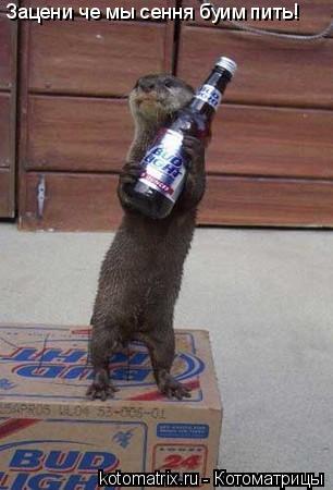 Котоматрица: Зацени че мы сення буим пить!