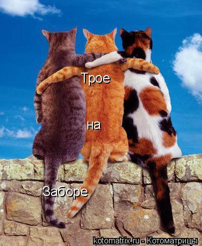 Котоматрица: Трое  на Заборе
