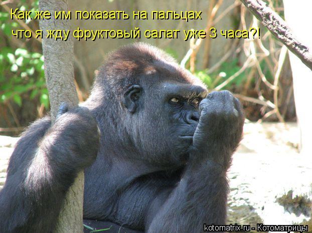 Котоматрица: Как же им показать на пальцах что я жду фруктовый салат уже 3 часа?!
