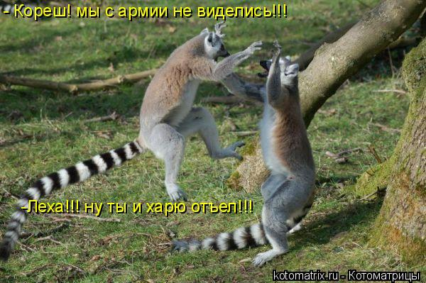 Котоматрица: - Кореш! мы с армии не виделись!!! -Леха!!! ну ты и харю отъел!!!