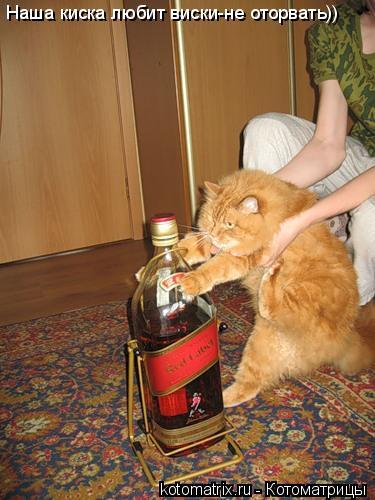 Котоматрица: Наша киска любит виски-не оторвать))
