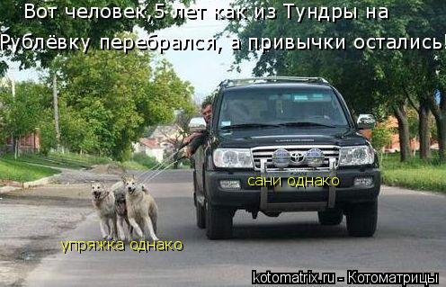 Котоматрица: сани однако упряжка однако Рублёвку перебрался, а привычки остались! Вот человек,5 лет как из Тундры на