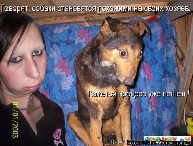 Котоматрица: Говорят, собаки становятся похожими на своих хозяев. Кажется процесс уже пошёл !