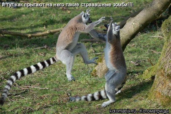 Котоматрица: и тут как прыгают на него такие страаашные зомби!!!