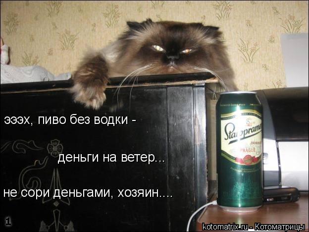 Котоматрица: эээх, пиво без водки -  деньги на ветер... не сори деньгами, хозяин....