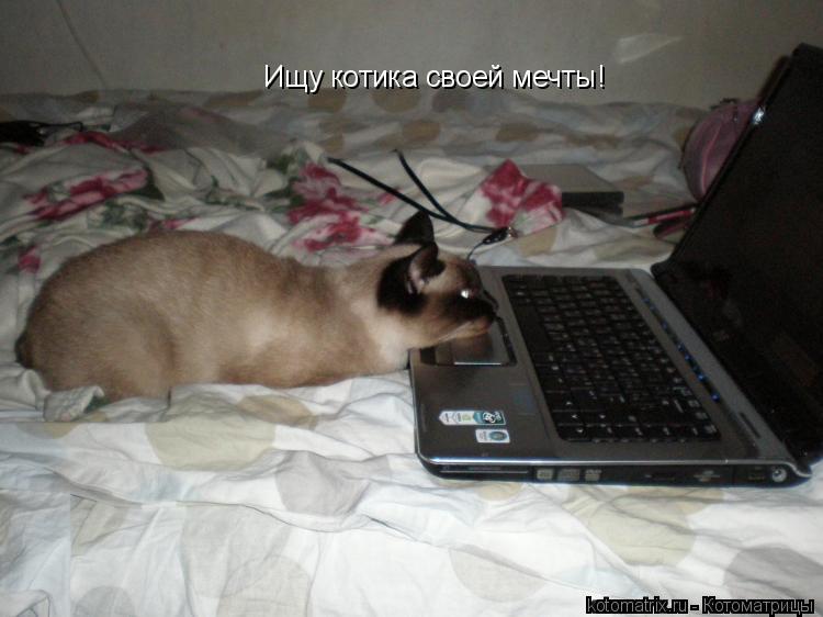 Котоматрица: Ищу котика своей мечты!