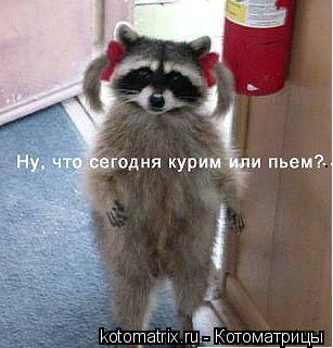 Котоматрица: ...