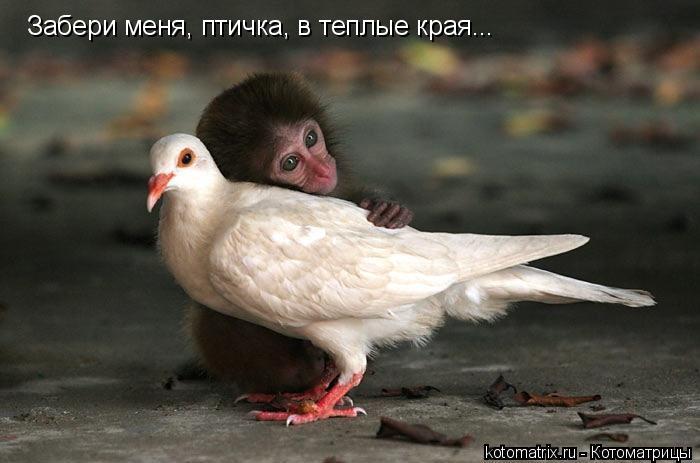 Котоматрица: Забери меня, птичка, в теплые края...