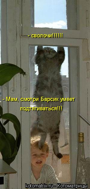 Котоматрица: - Мам, смотри Барсик умеет подтягиваться!!! - сволочи!!!!!!