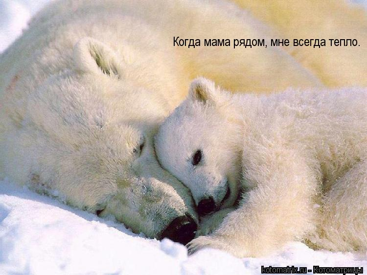 Котоматрица: Когда мама рядом, мне всегда тепло.