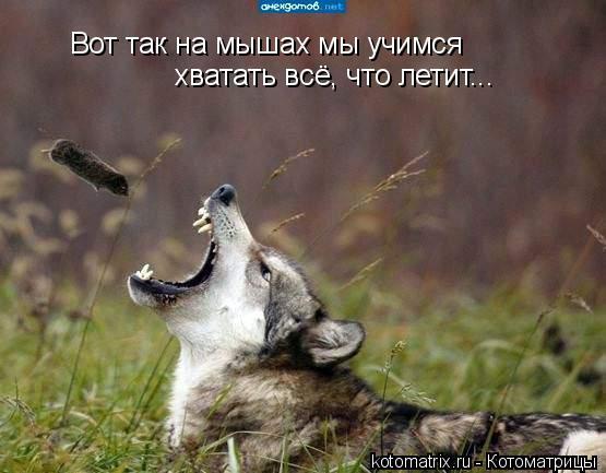 Котоматрица: Вот так на мышах мы учимся  хватать всё, что летит...