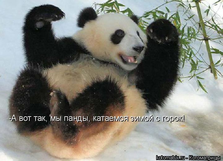Котоматрица: -А вот так, мы панды, катаемся зимой с горок!