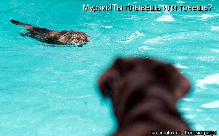 Котоматрица: Мурзик!Ты плывёшь или тонешь?