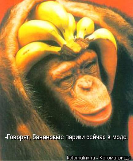 Котоматрица: -Говорят, банановые парики сейчас в моде.
