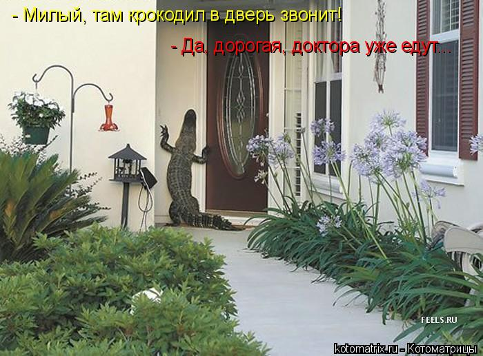 Котоматрица: - Милый, там крокодил в дверь звонит! - Да, дорогая, доктора уже едут...