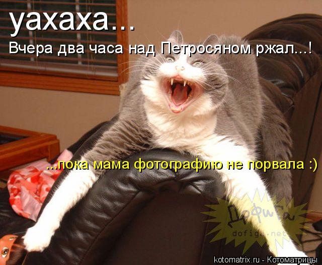 Котоматрица: уахаха... Вчера два часа над Петросяном ржал...! ...пока мама фотографию не порвала :)
