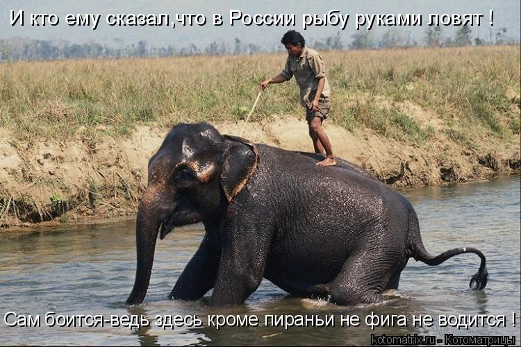 Котоматрица: И кто ему сказал,что в России рыбу руками ловят ! Сам боится-ведь здесь кроме пираньи не фига не водится !