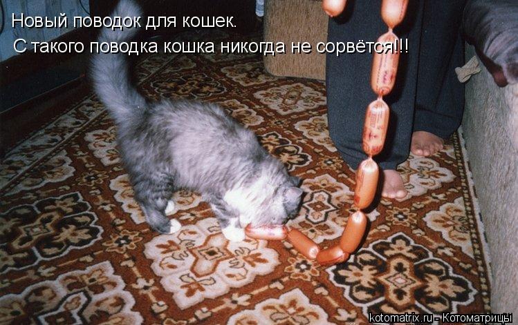 Котоматрица: Новый поводок для кошек. С такого поводка кошка никогда не сорвётся!!!