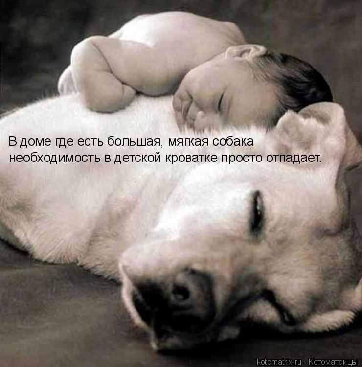 Котоматрица: В доме где есть большая, мягкая собака  необходимость в детской кроватке просто отпадает.