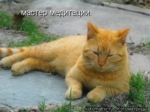 Котоматрица: мастер медитации.