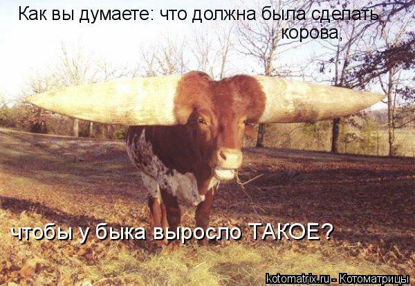 Котоматрица: Как вы думаете: что должна была сделать корова, чтобы у быка выросло ТАКОЕ?