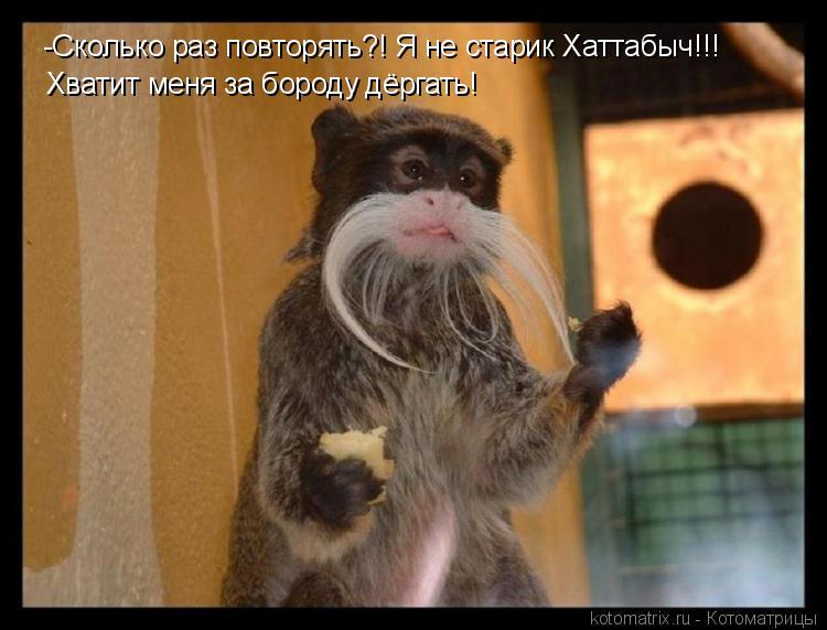 Котоматрица: -Сколько раз повторять?! Я не старик Хаттабыч!!! Хватит меня за бороду дёргать!