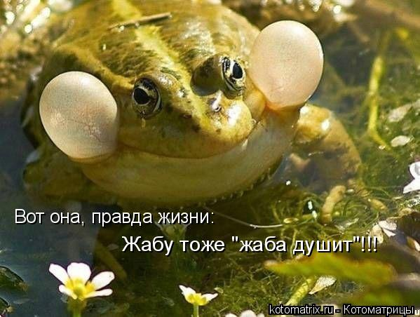 "Котоматрица: Вот она, правда жизни: Жабу тоже ""жаба душит""!!!"