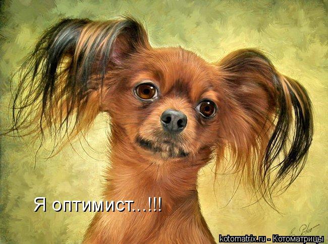 Котоматрица: Я оптимист...!!!