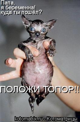 Котоматрица: Папа, я беременна! куда ты пошёл?  ПОЛОЖИ ТОПОР!!!!!!!!!!!!!!!!!!!!!!!