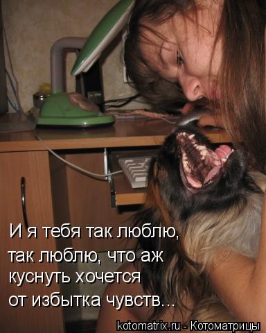 Котоматрица: И я тебя так люблю, так люблю, что аж куснуть хочется от избытка чувств...