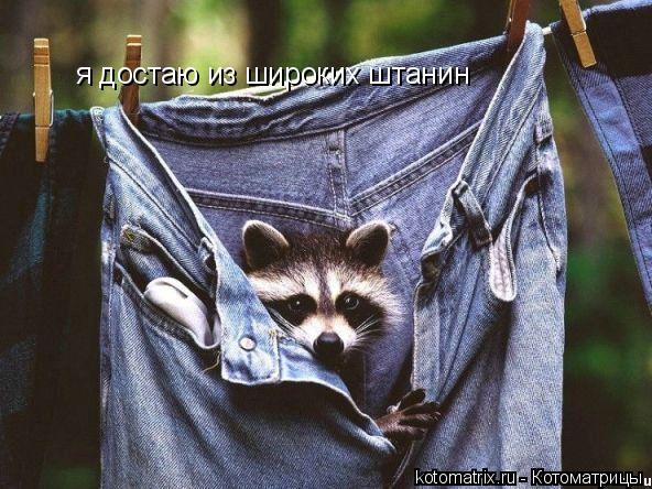 Котоматрица: я достаю из широких штанин