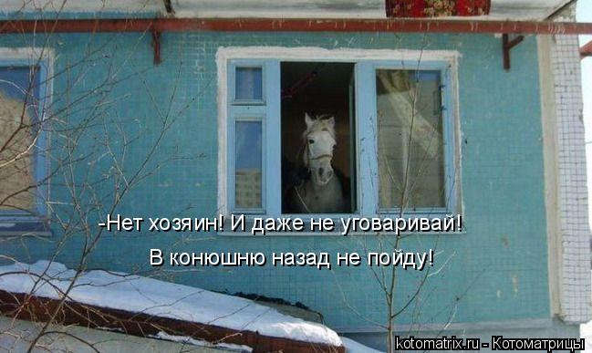 Котоматрица: -Нет хозяин! И даже не уговаривай!  В конюшню назад не пойду!