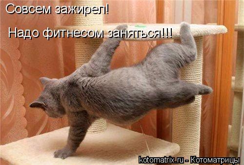 Котоматрица: Совсем зажирел! Надо фитнесом заняться!!!