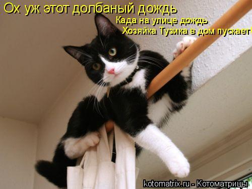 Котоматрица: Ох уж этот долбаный дождь Када на улице дождь Хозяйка Тузика в дом пускает!